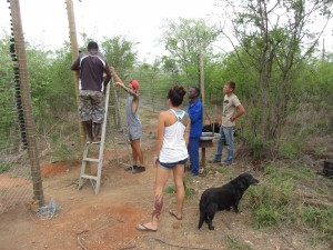 overseas support - vervet monkey foundation 2